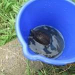 池には亀もいて捕まえることが出来たお友達も…