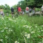 里山あそび場☆お花も沢山咲いていました!