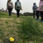 たんぽぽも少し咲いていました~!春ですね(*^^*)
