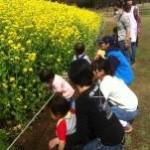 菜の花がきれに咲いていました~(*^^*)