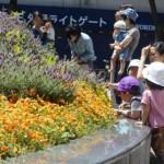カラフルなお花がいっぱい!