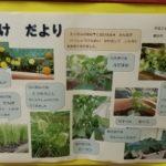 園では子どもたちが野菜を育てているんだって!